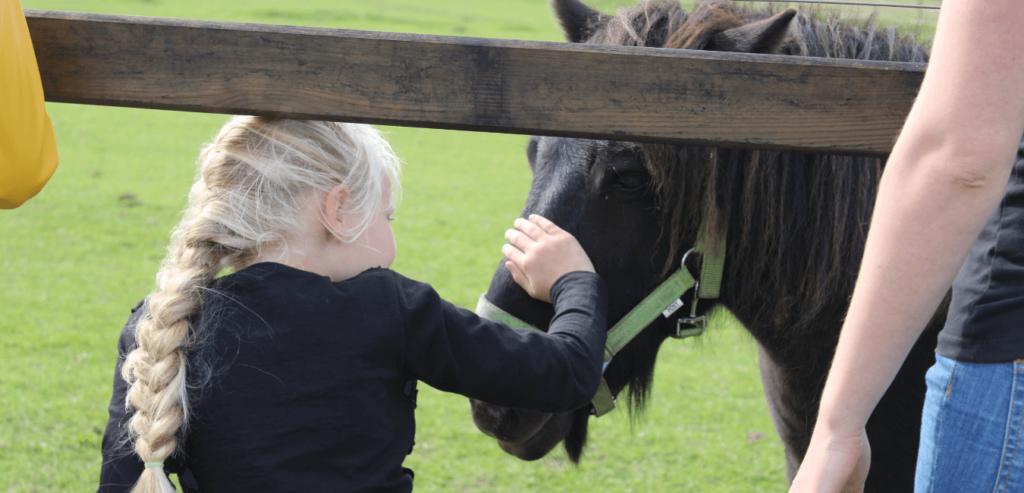 Vorange Paardencoaching