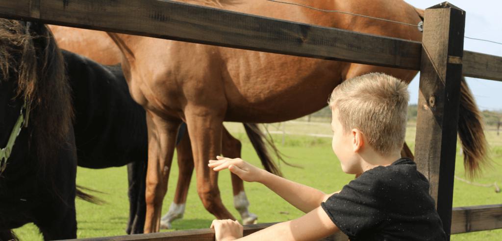 vorange paardencoaching 1