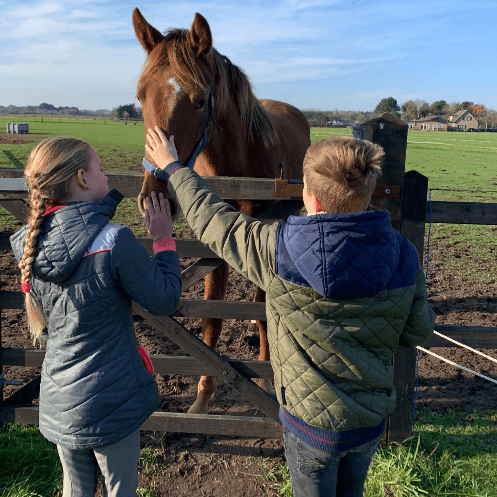 Oxytocine en paarden