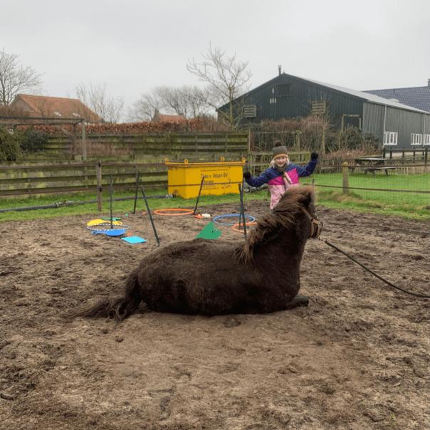 Individuele paardencoaching in Egmond Binnen