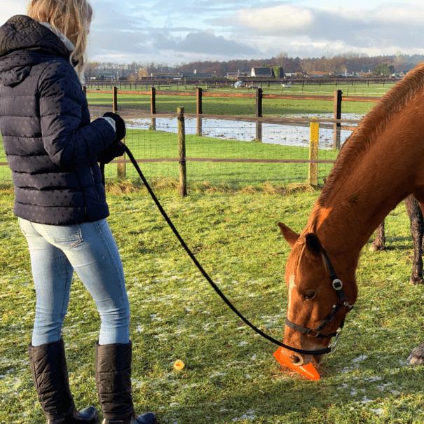 Persoonlijke paardencoaching