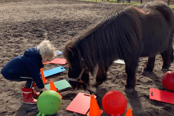 waarom een paardencoachsessie
