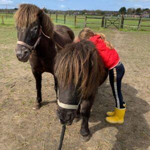paarden zien geen labels