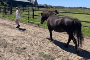 ADHD en paarden hoe helpt het